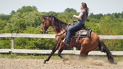 Horses Sold