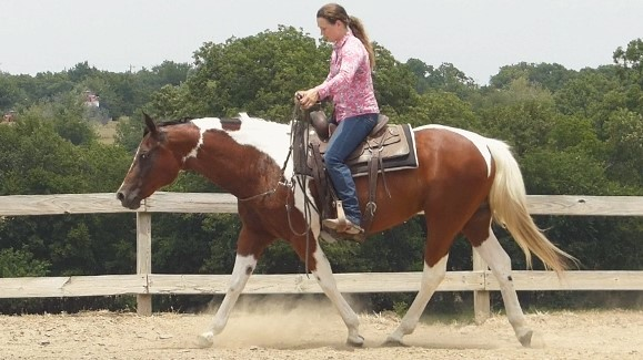 Mia Is An Incredible Mare That Will Pack Any Youth Or Adult Rider Around The Cutting Pen Trail Riding Ranch To Help Sort Cattle