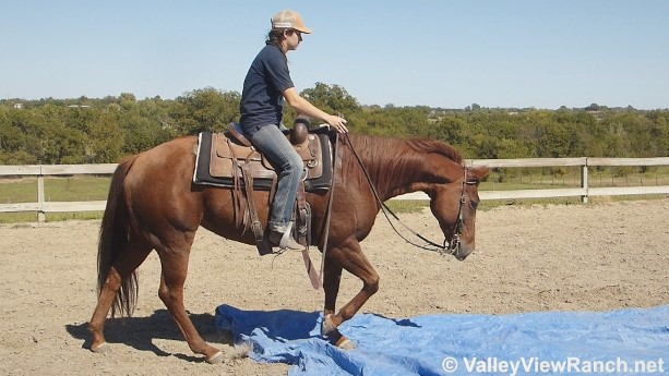 Maisie Is One Broke Gentle All Around Talented And Athletic Mare She Of The Easiest To Ride Horses In Barn Very Forgiving