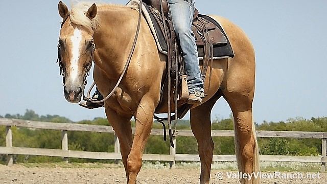 Duster Is A Gorgeous Dark Palomino Gelding With An Incredible Handle Anyone Can Cut Ranch Sort Of Team Pen On This Guy He We Originally Cutter Winning