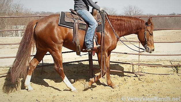 Sweet As Can Be So Very Easy And Simple To Ride She Has The Best In Your Pocket Personality Shes Sweetest Horse Barn
