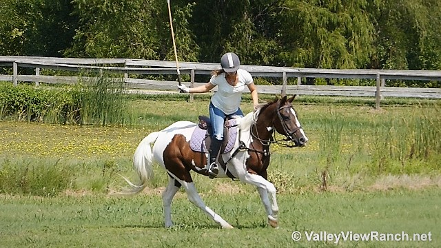 Malibu Is A Cool Looking As They Come And Very Broke She Has Been Used Polo Ball Stick Horse For Several Years Brave Handy